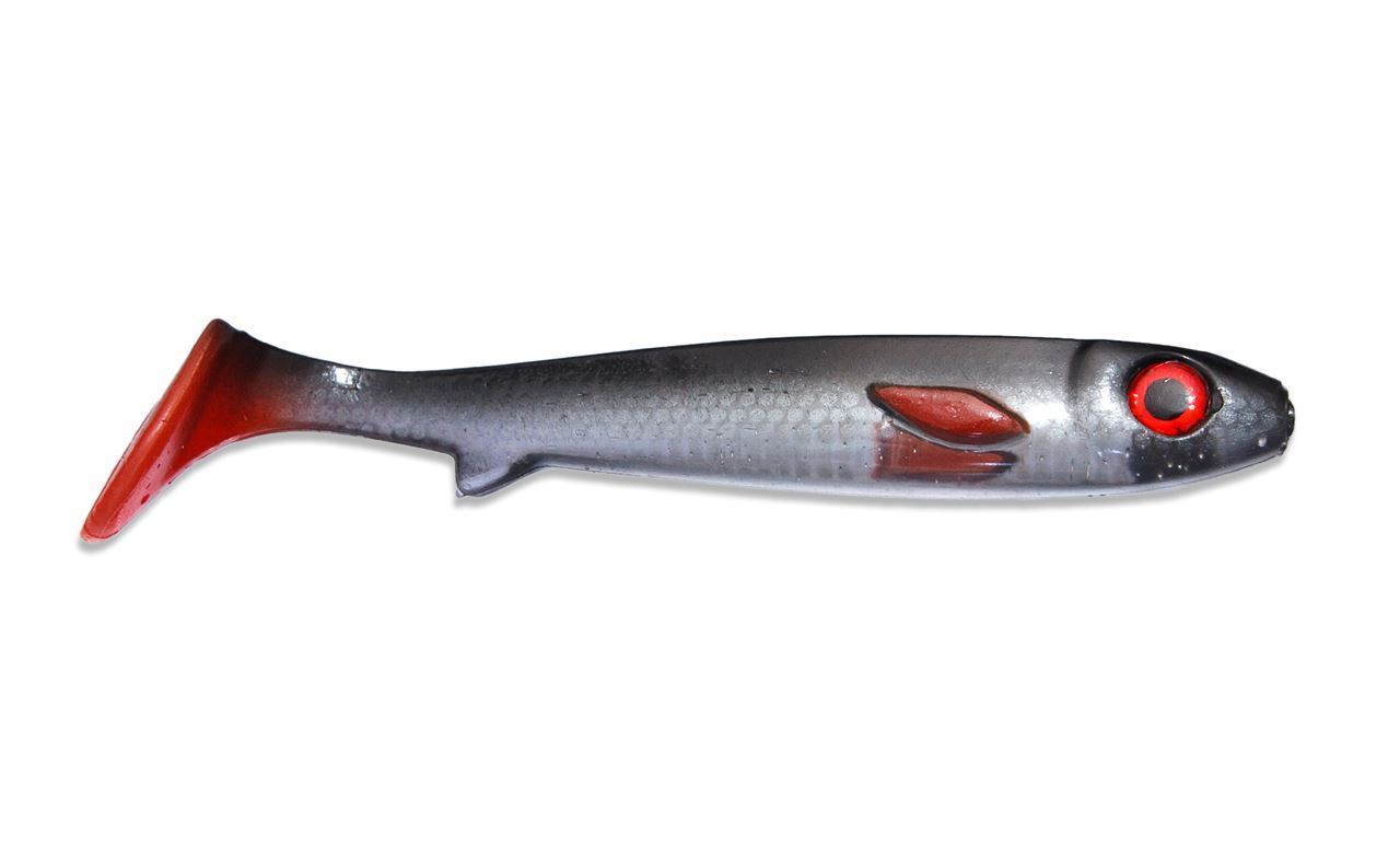 Picture of Flatnose Shad - Ghost Roach