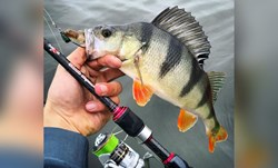 """Picture of Saxa Shade - """"The Perch Editon"""" Spinning 7'3'' - 10-30gr"""