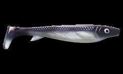 Picture of Fatnose Shad - Coregonus