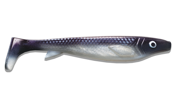 Picture of Fatnose Shad - Coregonus