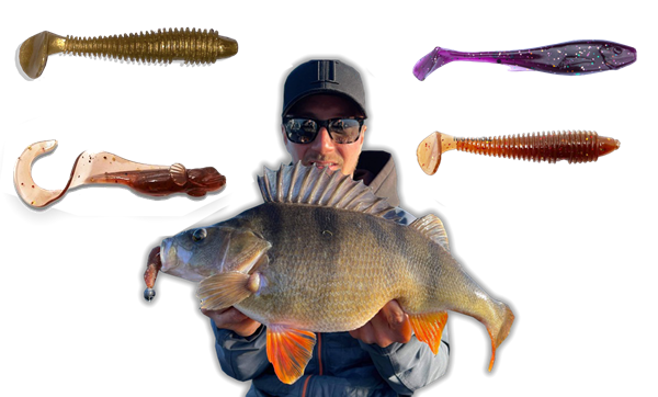 Picture of Big perch softbaits collection!